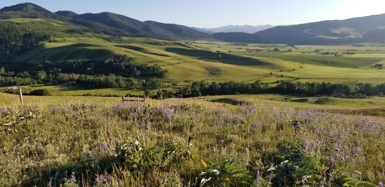Bozeman Real Estate: Land for Sale